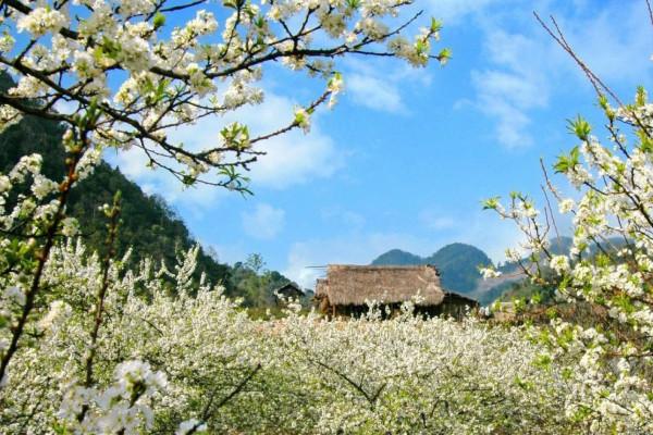 Free & Easy kỳ nghỉ tại Mộc Châu ở nhà nghỉ Mộc Châu Xanh 2 ngày 1 đêm - khởi hành từ Hà Nội