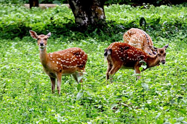 Vườn quốc gia Cúc Phương - lạc lối trong thiên nhiên hoang dã