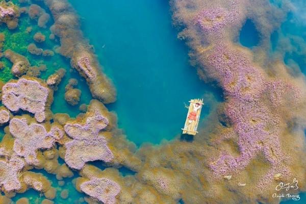 """Xuất hiện hồ tảo hồng Đà Lạt làm chao đảo team """"mê xê dịch"""""""