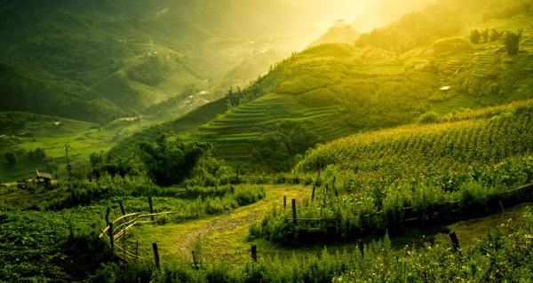 Fresh air and beautiful landscape on summer morning_001